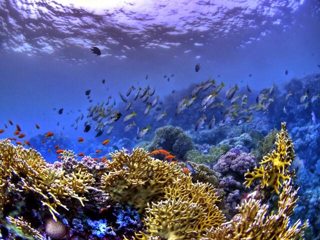 Tipo de fotografía submarina