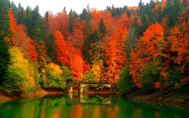 Fotografía de paisaje: Selva de Irati | Fuente: turismo.navarra.com