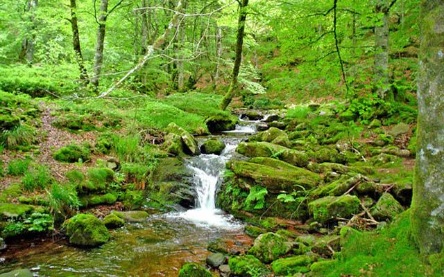 Fotografía de paisaje: selva de Irati | Fuente: TripAdvisor