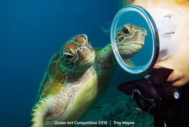"""""""Mirror mirror"""" por Troy Mayne. Tercer puesto en la categoría Wide-Angle de la Ocean Art Competition 2016. Realizada en Australia con una Nikon D200"""
