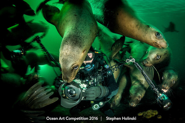 Fotógrafo submarino entre leones marinos