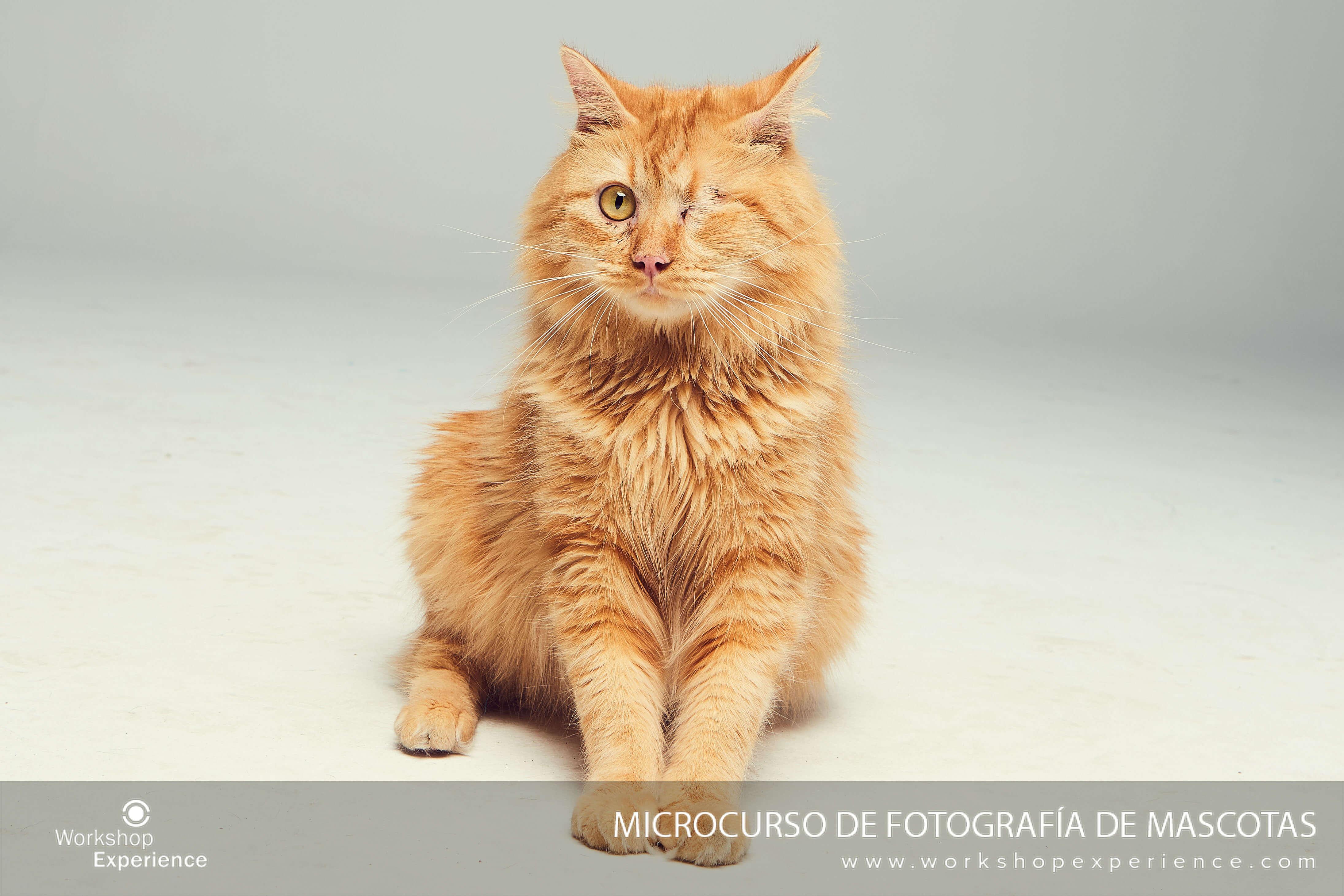 Gato de la protectora Animal Hope