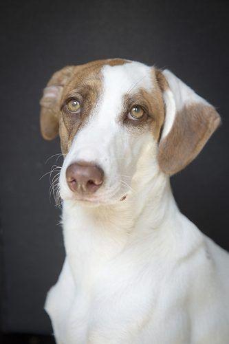 Perro blanco y marrón