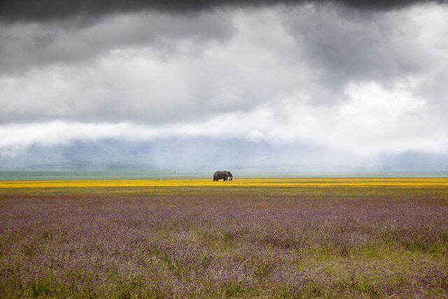 Elefante paseando por la sabana