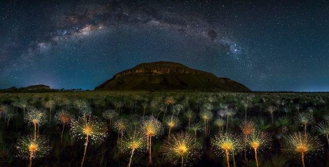 Naturaleza del parque nacional de Veadeiros con cielo estrellado