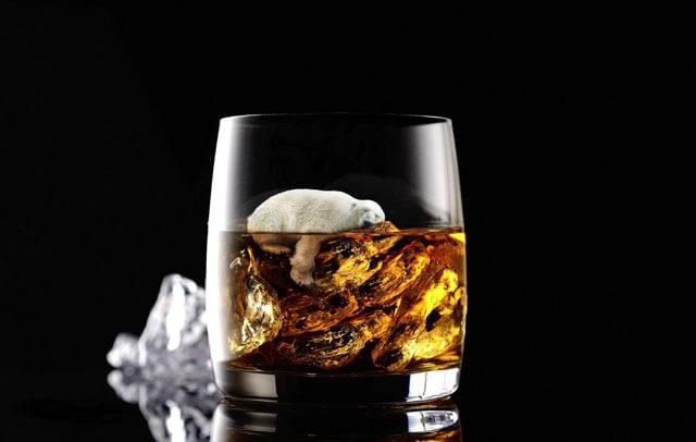 Oso polar en un vaso de whiskey.